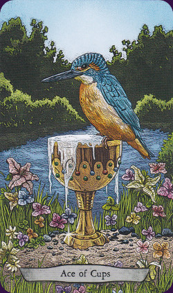 Animal-Totem-Tarot-6