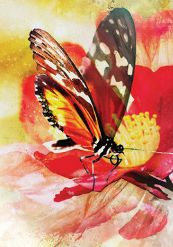 Butterfly-Affirmations-1