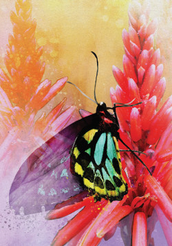 Butterfly-Affirmations-2