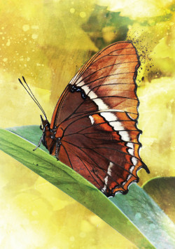 Butterfly-Affirmations-4