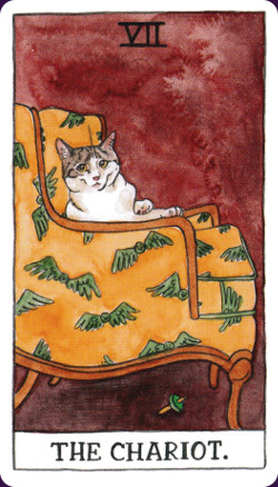 Cat Tarot2