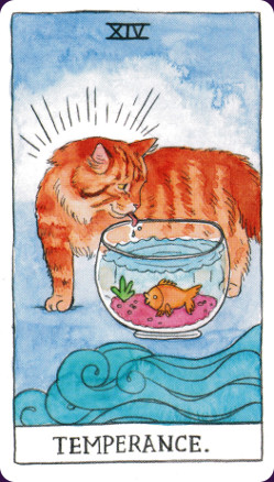 Cat Tarot3