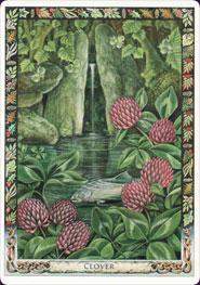 druid-plant-oracle-08541.jpg