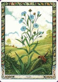 druid-plant-oracle-08542.jpg