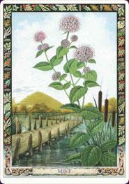 druid-plant-oracle-08544.jpg