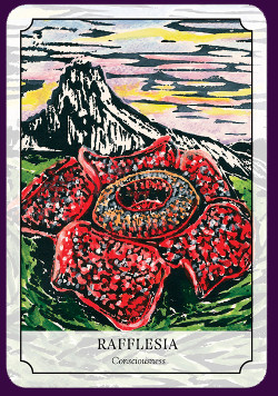 Flower-Reading-Cards-5