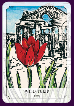 Flower-Reading-Cards-8
