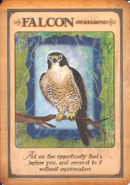 Messages from your animal spirit guides   archangel oracle.