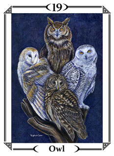 Pathfinder S The Animal Totem Deck Reviews Images Aeclectic Tarot