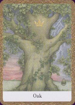 Wisdom-of-the-Trees-Oracle-6