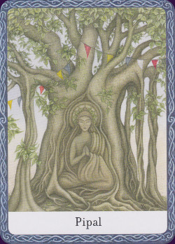 Wisdom-of-the-Trees-Oracle-7